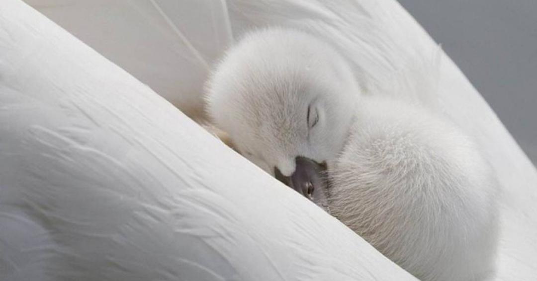 خواب چیست؟